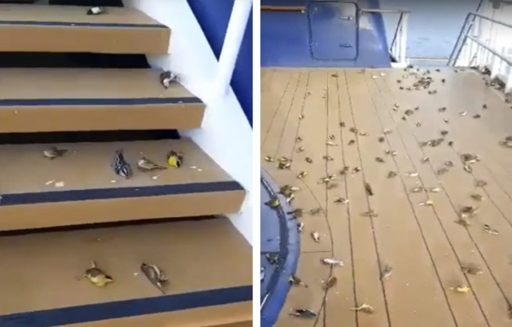 https://earthfrenzyradio.com/strange-unusual/4464-hundreds-of-birds-fall-from-the-sky-onto-cruise-ship-open-deck